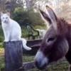 DonkeyCat